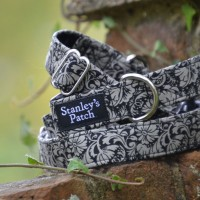 Isabella - Dog Collar